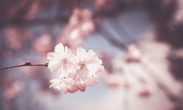 Piękna fototapeta w kwiaty